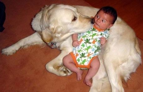 dog meet human