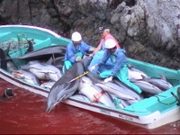 taiji kill cove