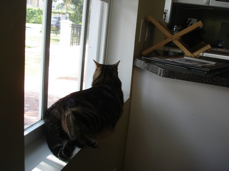 honeyed cat