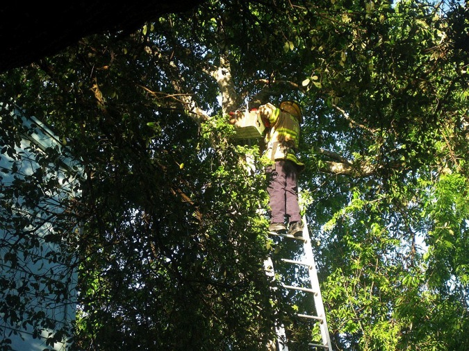 treecat 7