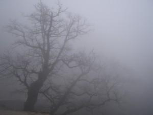 Everlasting Fog